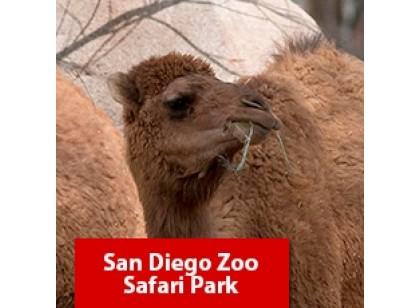 San Diego Zoo Safari Park - 1 dia